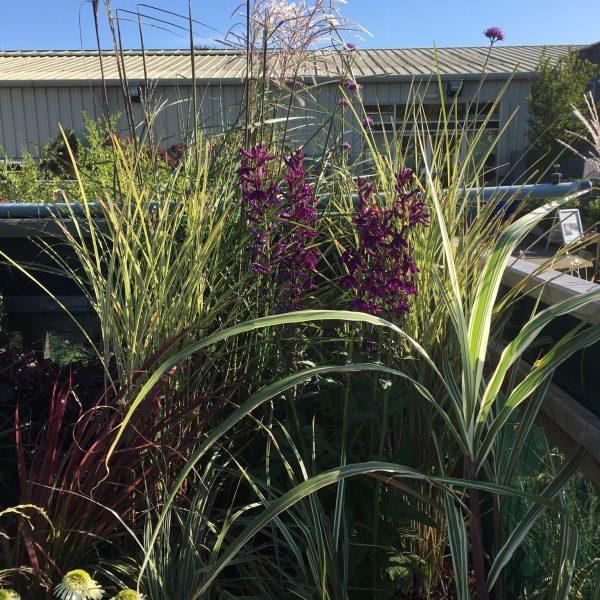 Plants at Tong Garden Centre
